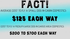 Cost to fly dogs