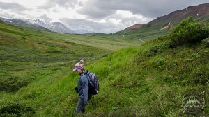 Trailless wilderness in Denali National Park