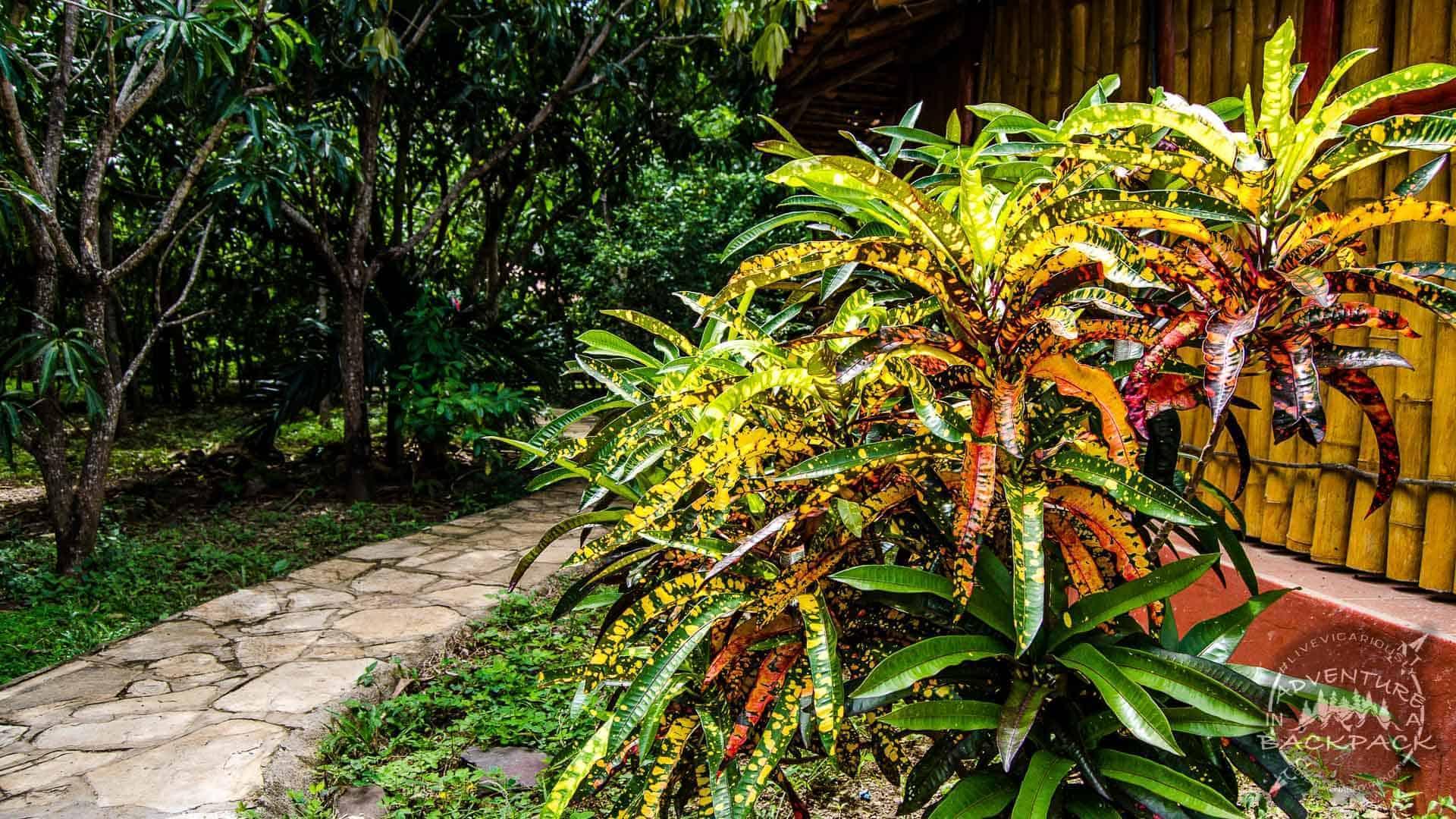 Mango Rosa Resort-5