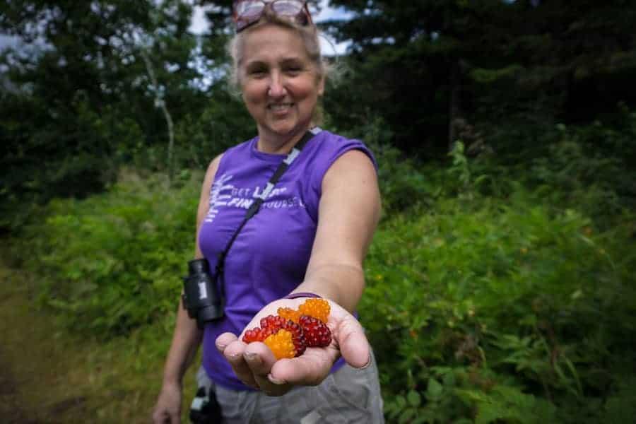 Berries in Alaska
